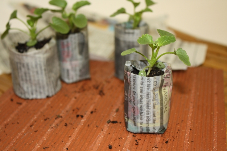 Newspaper Seed Starters